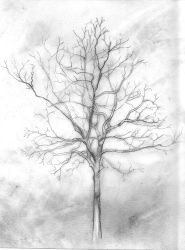 "graphite on vellum, 4.5x6"", 2010"